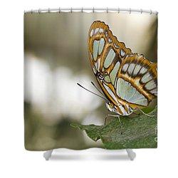 Malachite Butterfly Shower Curtain by Bryan Keil