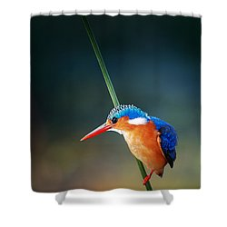 Malachite Kingfisher Shower Curtain