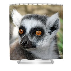 Shower Curtain featuring the photograph Malagasy Lemur by Sergey Lukashin