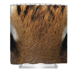 Malayan Tiger Eyes Shower Curtain