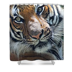 Malayan Tiger Shower Curtain