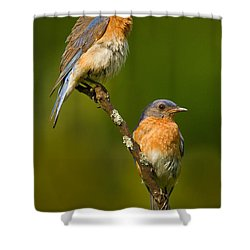 Male And Female Bluebirds Shower Curtain by Jerry Fornarotto