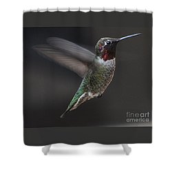 Shower Curtain featuring the photograph Male Anna Hummingbird In Flight by Jay Milo