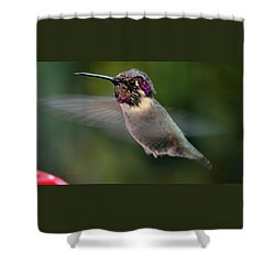 Shower Curtain featuring the photograph Male Anna's In Flight by Jay Milo