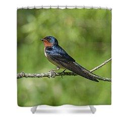 Male Barn Swallow Hirundo Rustica Dsb262 Shower Curtain