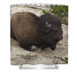 Male Buffalo At Hot Springs Shower Curtain by Belinda Greb