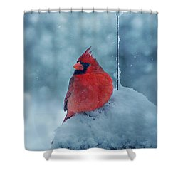 Male Cardinal In The Snow Shower Curtain by Sandy Keeton