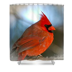 Shower Curtain featuring the photograph Male Cardinal  by Kerri Farley