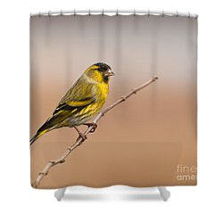 Shower Curtain featuring the photograph Male Eurasian Siskin by Liz Leyden