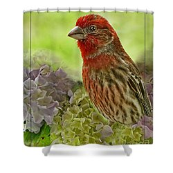 Shower Curtain featuring the photograph Male Finch In Hydrangesa by Debbie Portwood