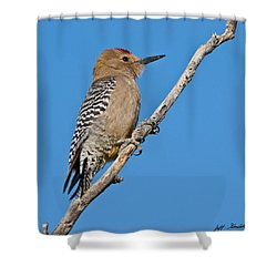 Male Gila Woodpecker Shower Curtain
