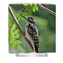 Male Hairy Woodpecker Picoides Villosus Shower Curtain by Kenneth Whitten