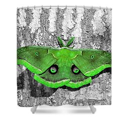 Male Moth Green Shower Curtain by Al Powell Photography USA