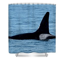 Shower Curtain featuring the photograph Male Orca Killer Whale In Monterey Bay 2013 by California Views Mr Pat Hathaway Archives