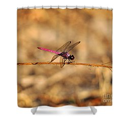 Male Roseate Skimmer Shower Curtain