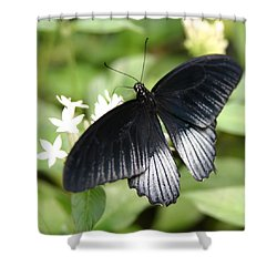 Male Scarlet Swallowtail Shower Curtain