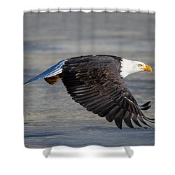 Male Wild Bald Eagle Ready To Land Shower Curtain