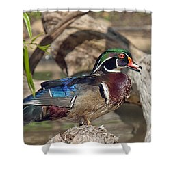 Male Wood Duck Dwf029 Shower Curtain