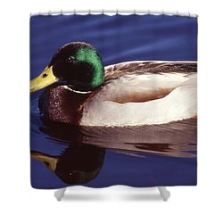 Mallard In The Mirror Shower Curtain