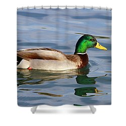 Mallard On The Lake Shower Curtain by Shoal Hollingsworth
