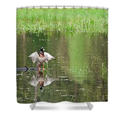 Mallard Shower Curtain