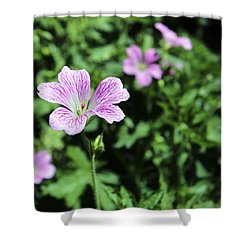 Mallow Cheeses Shower Curtain by Paul Fell