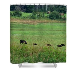 Mama Bear And 4 Cubs Shower Curtain