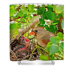 Mama Bird Shower Curtain by Frozen in Time Fine Art Photography