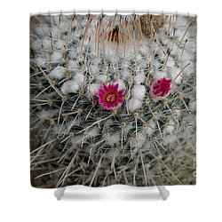 Mammillaria Geminispina Shower Curtain