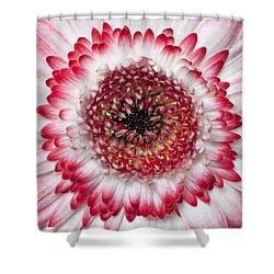 Mandala Shower Curtain by Daniel Csoka