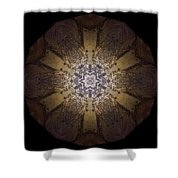 Shower Curtain featuring the photograph Mandala Sand Dollar At Wells by Nancy Griswold