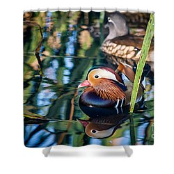 Mandarin Duck Reflections Shower Curtain