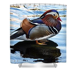 Mandarin Duck Shower Curtain by Robert Bales