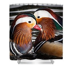 Mandarin Lovers Shower Curtain