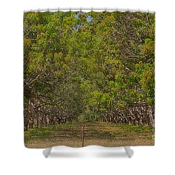 Mango Orchard Shower Curtain by Douglas Barnard