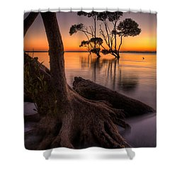 Mangroves Of Beachmere Shower Curtain
