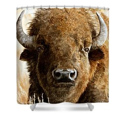 Manifest Destiny  Sold Shower Curtain