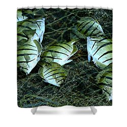 Manini Catch Shower Curtain by Lehua Pekelo-Stearns