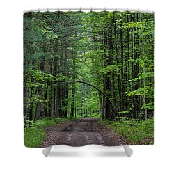 Manistee National Forest Michigan Shower Curtain by Steve Gadomski