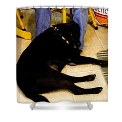 Shower Curtain featuring the photograph Man's Best Friend by Barbara Griffin
