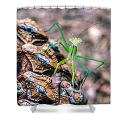 Shower Curtain featuring the photograph Mantis On A Pine Cone by Rob Sellers