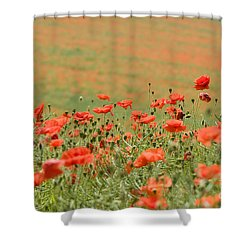 Many Poppies Shower Curtain by Anne Gilbert