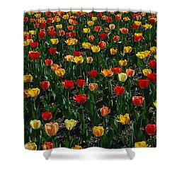 Many Tulips Shower Curtain by Raymond Salani III