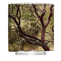 Manzanita Tree Shower Curtain by Suzanne Luft