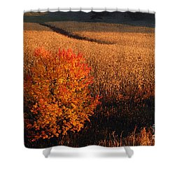 Maple And Cornfield At Dawn Shower Curtain by Larry Ricker
