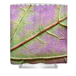 Maple Leaf Macro Shower Curtain by Adam Romanowicz