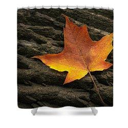 Maple Leaf Shower Curtain by Scott Norris