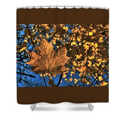 Maple Leaf Still Standing Shower Curtain