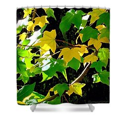 Maple Leaves In Sunlight Shower Curtain