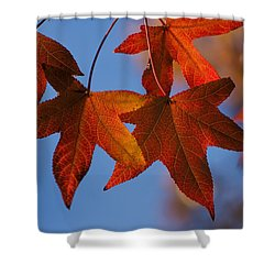 Maple Leaves In The Fall Shower Curtain by Stephen Anderson